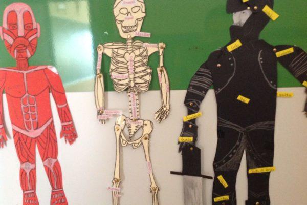 Estudio anatómico armaduras cuadro Beneto