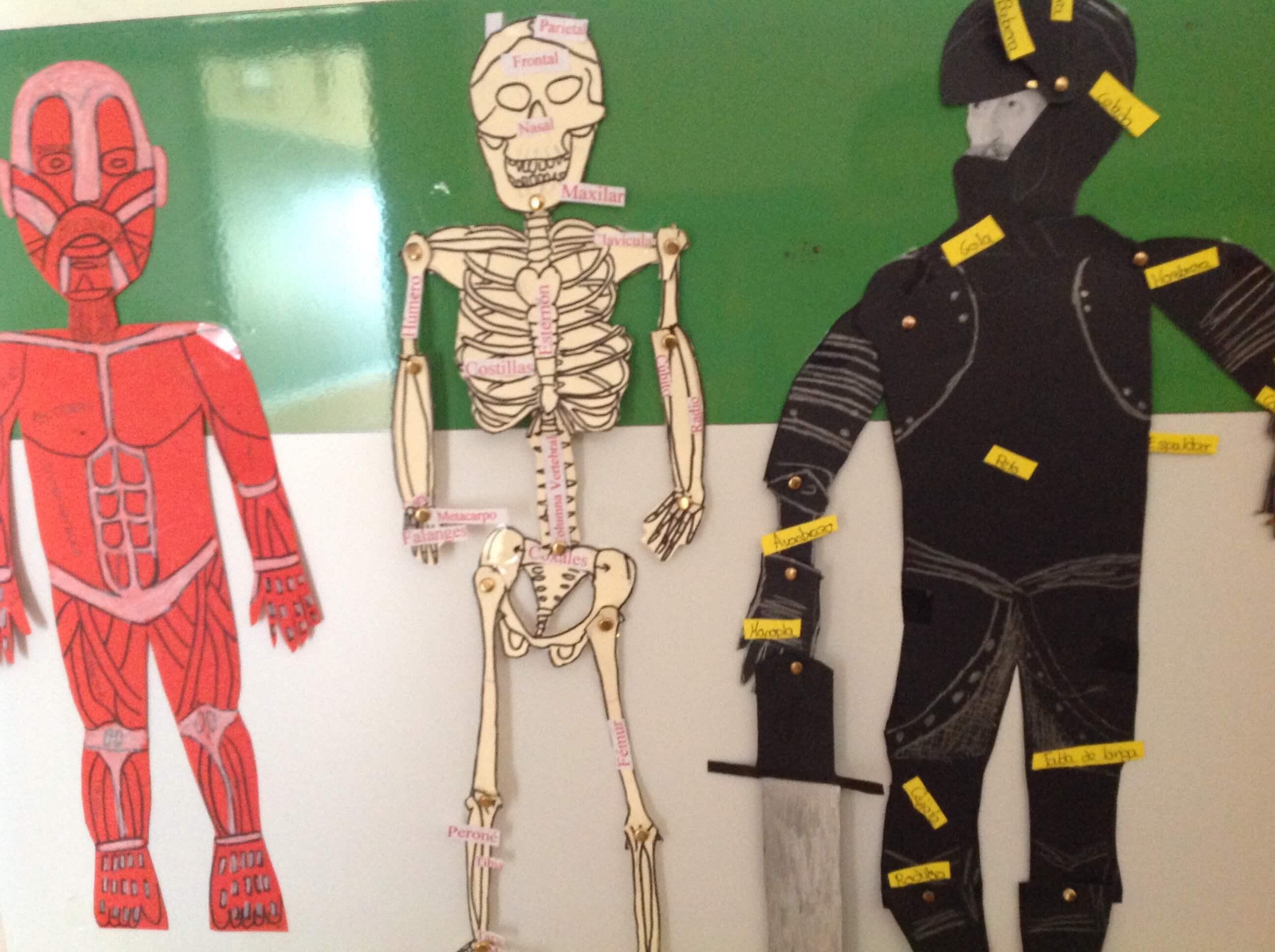 estudio-anatomico-armaduras-cuadro-beneto